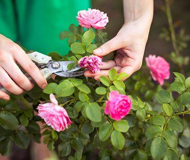 Odpowiedni sprzęt pomoże ci zadbać o ogród