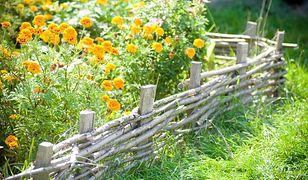 Piękny ogród naturalistyczny