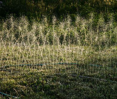 Dobre nawodnienie to podstawa pięknego wyglądu trawnika
