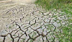 Grozi nam susza. Ostrzeżenia hydrologiczne nie pozostawiają złudzeń