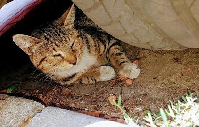 """Otwock. Połamane łapki, otwarte rany, zdarta skóra. """"Kot prawdopodobnie został brutalnie pobity"""""""