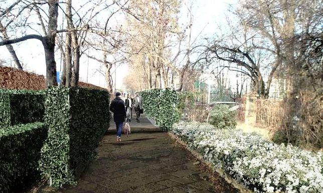 """Dwukilometrowy """"zielony mur"""" stanie na Ochocie. """"Posadzimy 21 tys. krzewów"""""""
