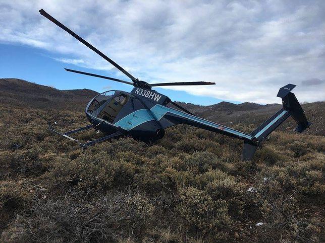 Łoś strącił helikopter. Załoga chciała oznakować zwierzę