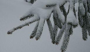Alert IMGW dla dwóch województw. Ostrzeżenie przed opadami śniegu