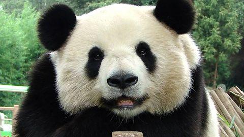 Antywirusy Panda uległy samozniszczeniu i unieruchomiły wiele komputerów
