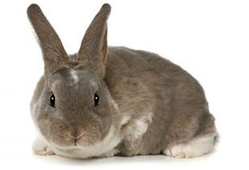 W Szwecji palą w piecach królikami