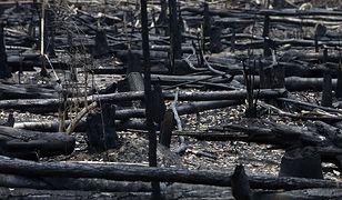Rozmiar spustoszenia Amazonii jest ogromny