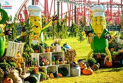 Jak powstaje największa w Polsce jesienna dekoracja?