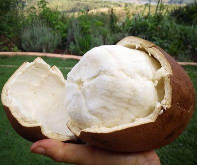Owoc cupuacu to baza, z której robi się masło cupuacu