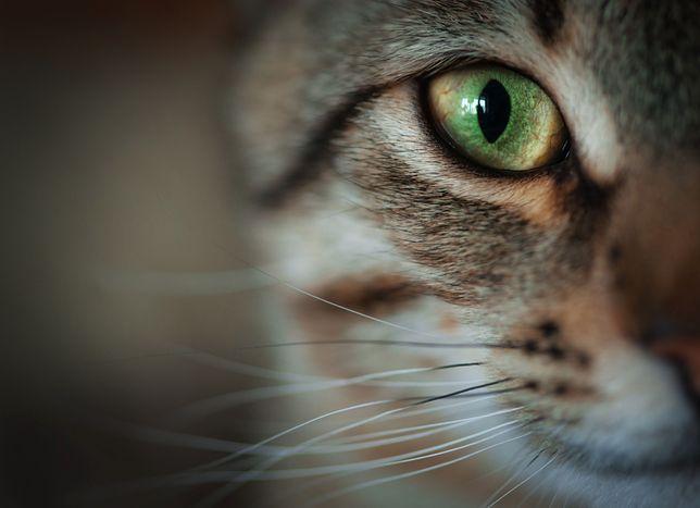 Koty rządzą. I mają swoje święto