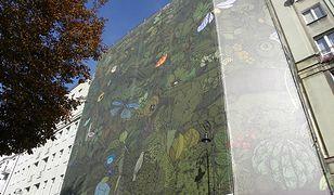 Dżungla na budynku przy ul. Noakowskiego [wideo]