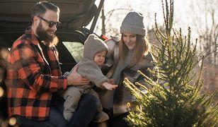 Nie kupuj choinki, wypożycz ją! Weź drzewko i oddaj po świętach