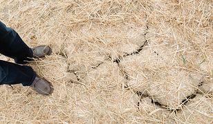 Susza w Polsce daje się we znaki rolnikom