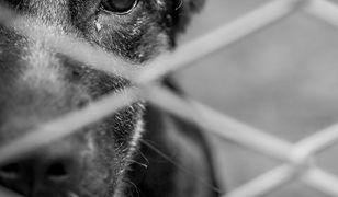 Sąd za znęcanie nad zwierzętami skazał Stefana D. na 2,5 roku więzienia. Mężczyzna zapowiada apelację