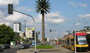 Warszawa. Palma na rondzie de Gaulle'a kończy dziś 17 lat. Jak sztuczne drzewo znalazło się na Nowym Świecie?