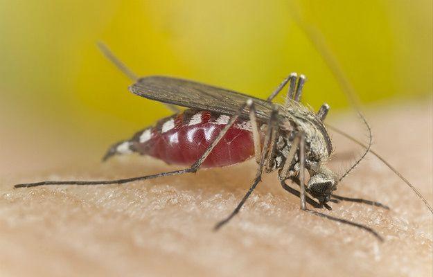 Komary i kleszcze już atakują. A ma być tylko gorzej.