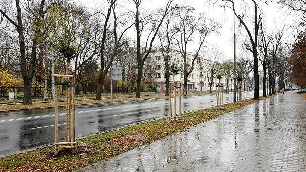 """W Śródmieściu pojawiło się najwięcej nowych drzew. """"Większość przyjazna alergikom"""""""