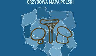 Gdzie po grzyby w Polsce? Sprawdziliśmy, co radzą grzybiarze - efektem jest grzybowa mapa Polski.