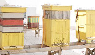 Pomysł na biznes: Miejskie pszczoły