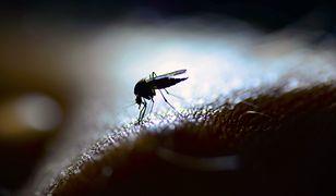 Komary w Polsce. Dzieje się coś dziwnego
