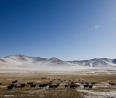 Mongolia – co warto wiedzieć o kraju stepów i bezdroży. Co zobaczyć w Mongolii?