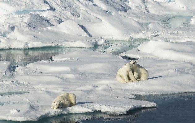 Svalbard, Norwegia