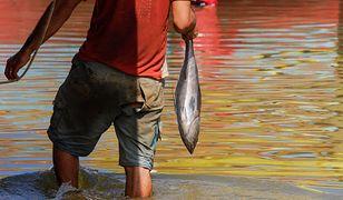 Kolumbia. Z gardła wędkarza wyciągnięto 18-centymetrową rybę