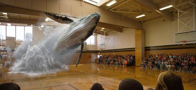 Niesamowite wideo - wieloryb wyskakuje z podłogi sali gimnastycznej