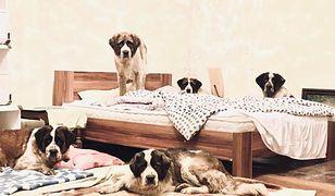 Według nowego badania psy są najstarszymi kompanami ludzi