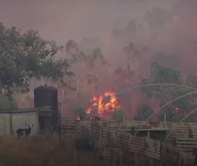 Pożary w Hiszpanii. Ogień zabił dziesiątki zwierząt