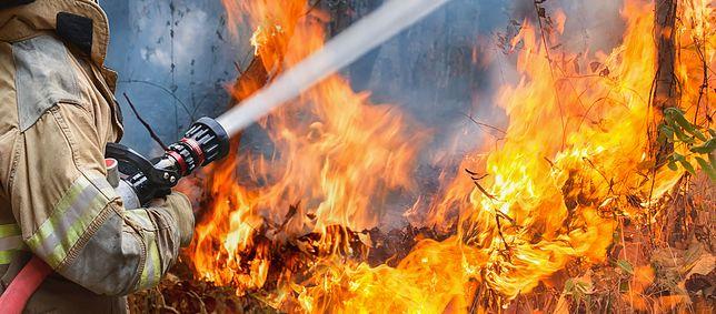 Może spłonąć nawet 40 hektarów lasu
