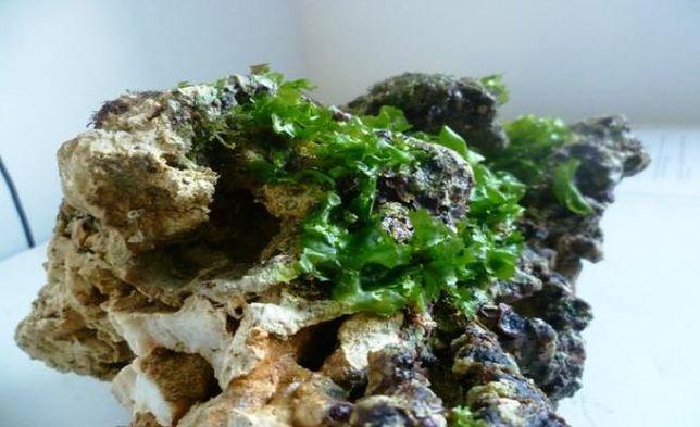 Sukces celników. 170 kg rafy koralowej zamiast na Ukrainę trafi do gdyńskiego oceanarium