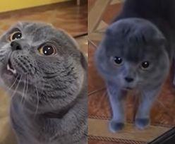 Obrażony kot zaczął rozmawiać z właścicielką. Wszystko zostało nagrane!