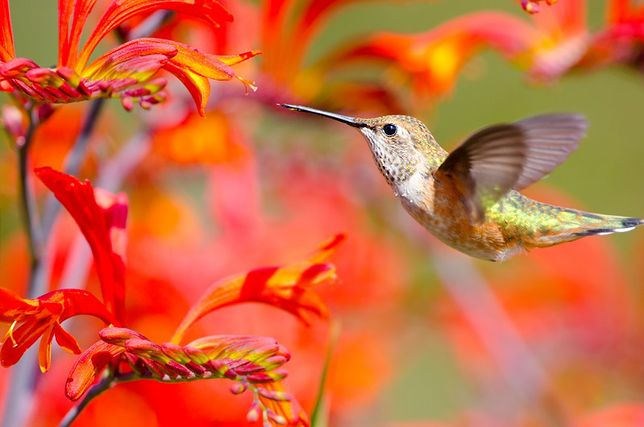 Spodnie pełne kolibrów