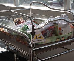 Małpa zaatakowana niemowlaka. Dziecko walczy o życie