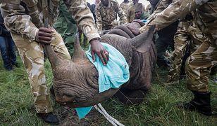 Wspierani przez WWF strażnicy walczący z kłusownikami przypominają paramilitarne bojówki. Tu strażnicy w parku w Kenii