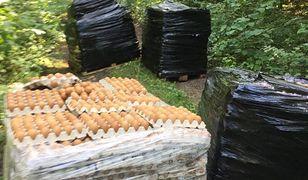 Leśnicy znaleźli w lesie pod Olsztynem 4 palety jajek