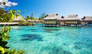 Malediwy. Oferta dwutygodniowego stażu w Ośrodku Ratowania Żółwi Morskich