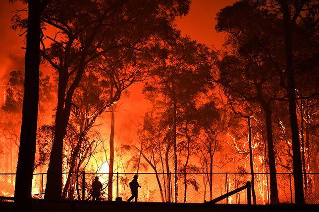 Australia: dramat strażaków walczących z pożarami. Polacy pomagają