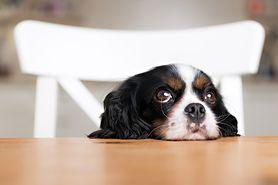 Szczepienia psa – obowiązkowe szczepienia, kalendarz i przeciwwskazania