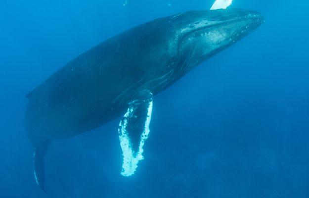 """Okaleczone dziecko trafiło do szpitala. Ministerstwo alarmuje ws. """"niebieskiego wieloryba"""""""