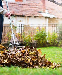 Czy warto grabić liście na zimę?