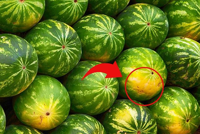 Wystarczy spojrzeć na plamkę na dole arbuza