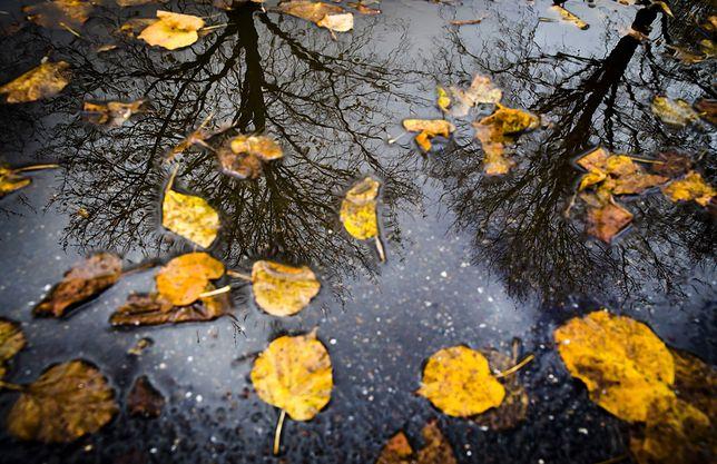 W sobotę z rana będzie padać i wiać