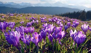 Pierwsze oznaki wiosny już w Polsce. Zwiastują ciepłe dni