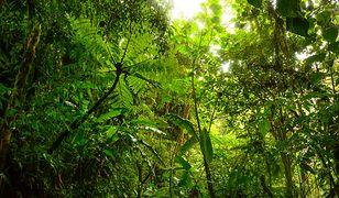 Każdy może zaadoptować drzewo z kolumbijskiej dżungli