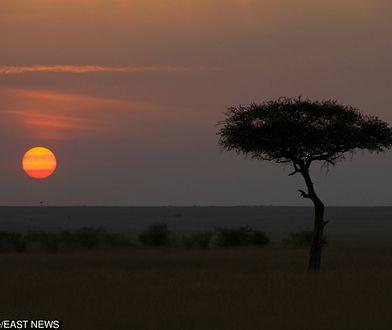 Atrakcje przyrodnicze Kenii przyciągają coraz więcej turystów.