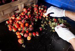Mieszkaniec Kijowa wysypał tonę ziemi na balkon. Chciał uprawiać truskawki