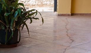 Mrówki w domu to częsty problem szczególnie przy ciepłych porach roku.