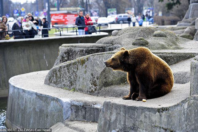 Niedźwiedzie zostaną tu do śmierci